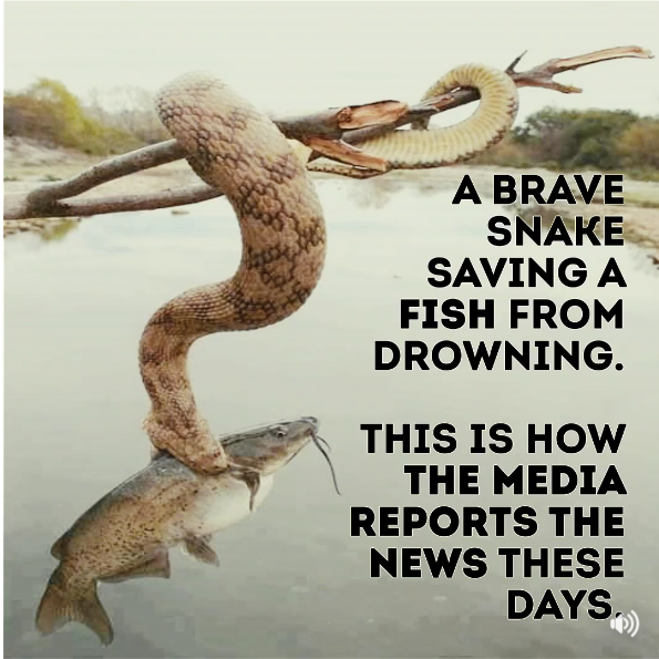 brave snake saving fish from drowning.png