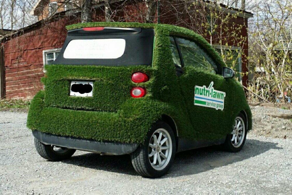 2018-05-05 Grassy Smart.jpg