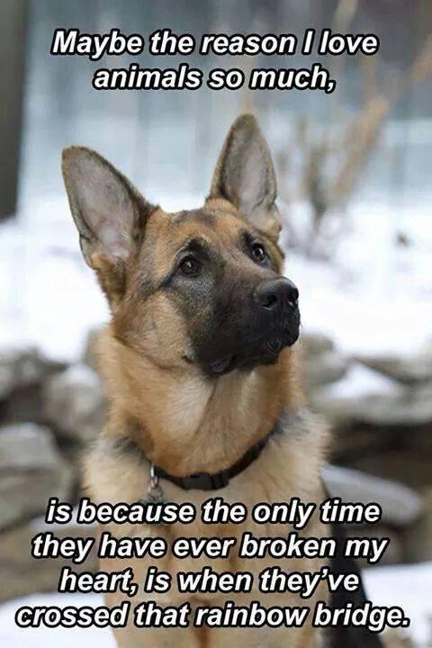 Dogs 009.jpg