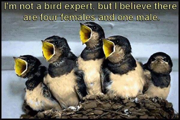Bird expert.jpg