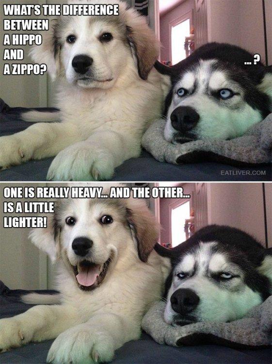 Dogs 117 pun.jpg