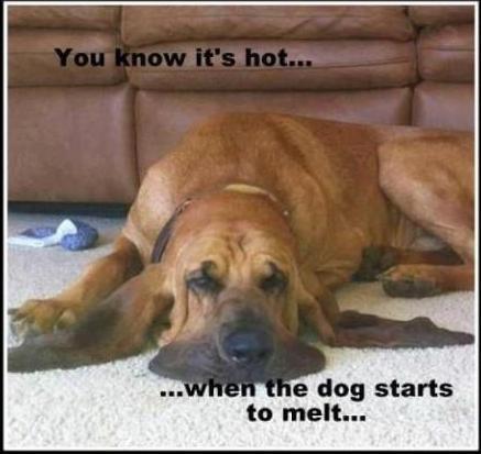 Melting dog.jpg